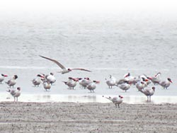 冬遊南市賞候鳥 正是好時機
