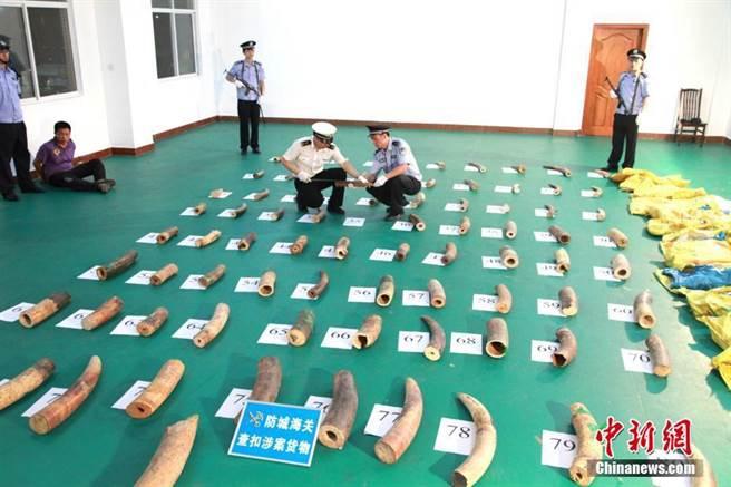 廣西嚴打瀕危物種走私 今年查扣象牙近10噸。(照片取自中新網)