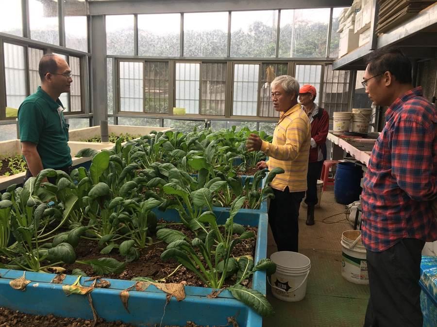 新北市石門區有機農未來將成立合作社,由單位統一行銷,農民將可專心種植作物。(新北市石門區公所提供/張睿廷新北傳真)