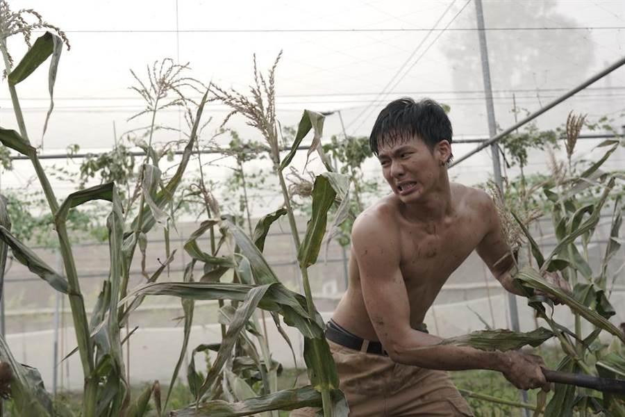 吳念軒怒砍玉米田。(牽猴子提供)