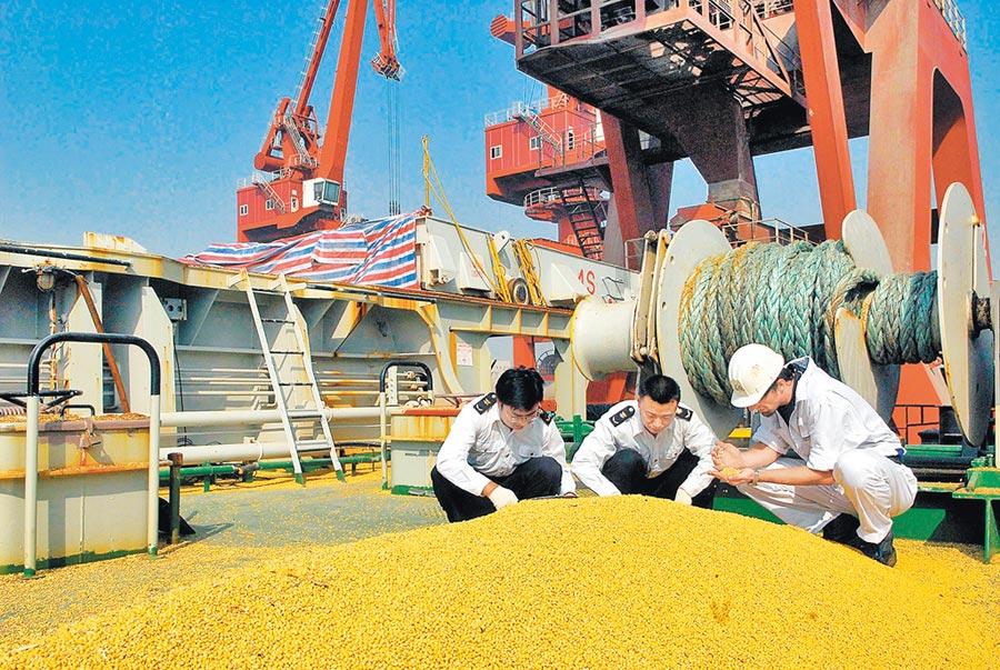 山東對進口美國大豆中的有害生物進行抽樣。(新華社資料照片)