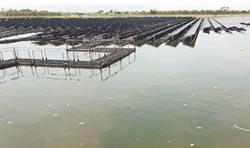 養殖戶:光電埤塘犧牲百年產業