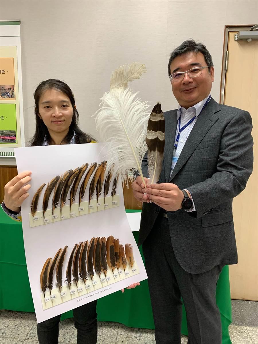 中醫大團隊研究鳥類羽毛的演變,為不同鳥類羽毛如何適應其生態與環境做出解密。(林欣儀攝)