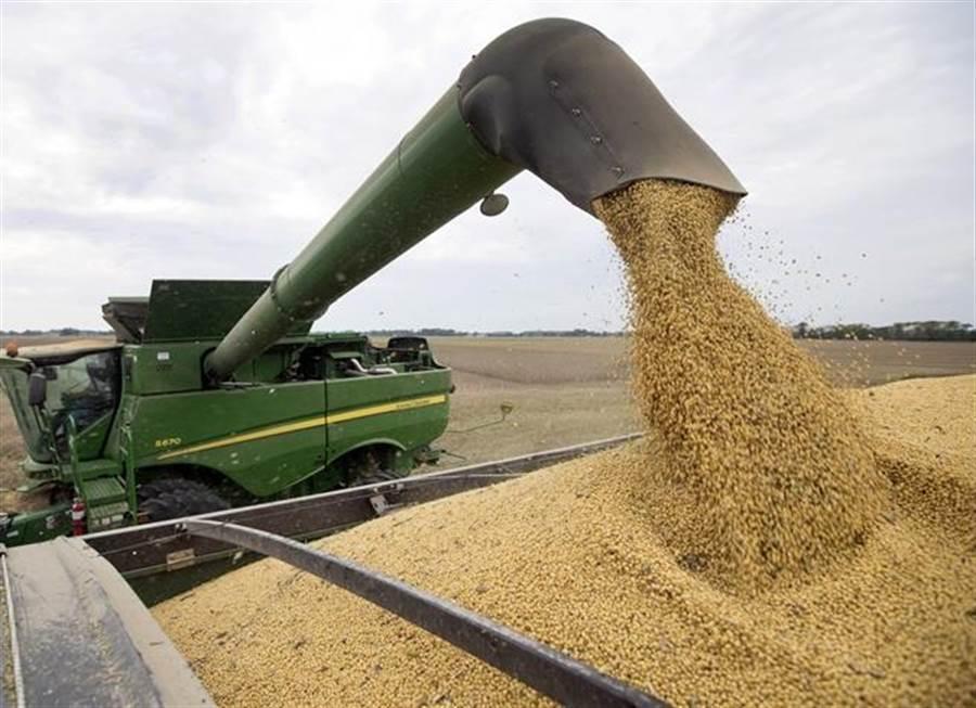 大陸先前約1,000萬噸美國大豆進口關稅豁免配額,如今已經接近用盡。(圖/美聯社)