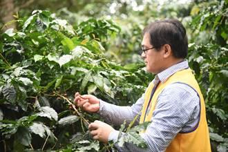 花蓮》讓族人以咖啡代酒 傻醫生栽入農業