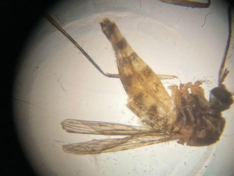 uHandy的行動顯微鏡,只要使用其特殊鏡頭,像小至蚊子的昆蟲,即能在手機中看的一清二楚。(石欣蒨攝)