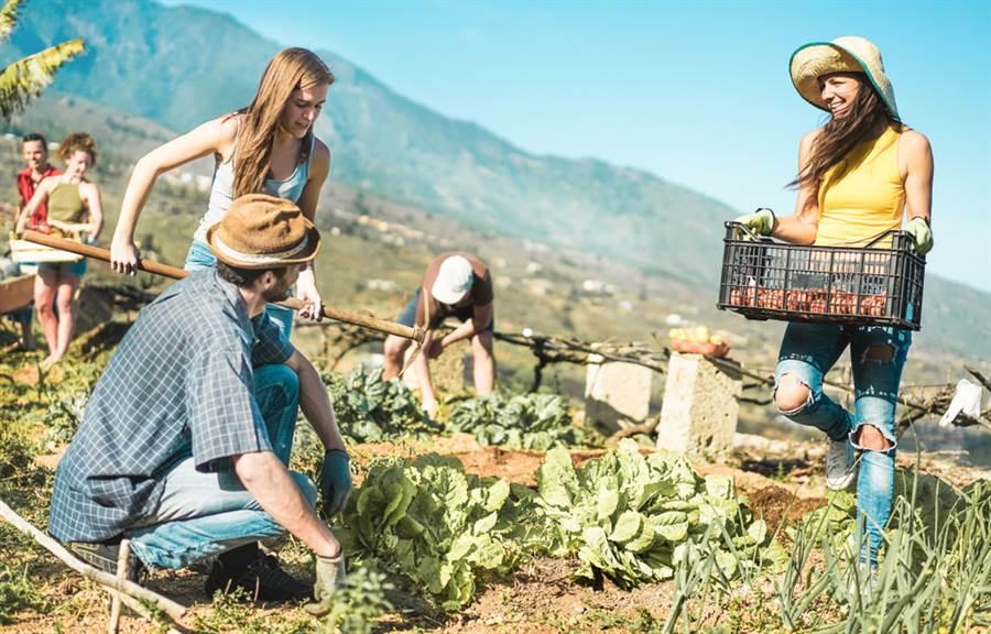 8名台灣女背包客到澳洲一間農場打工,卻因為時薪過低不夠負擔房租,只好出賣身體。(示意圖/ 取自達志影像)