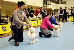 毛孩選美賽嘉市登場 超過1200犬次參與