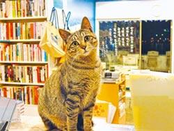 陪伴淡水街貓 詩人隱匿的另類修行