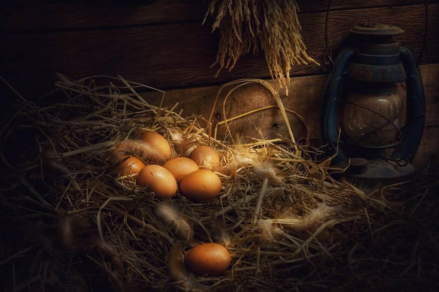 出土1700年前蛋 竟仍完整未破(示意圖非當事鳥蛋/達志影像)