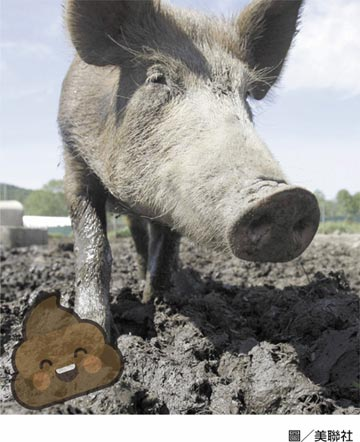 豬糞造成天然氣過剩