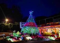 桃園山城聖誕紅花節 14日來看耶誕紅