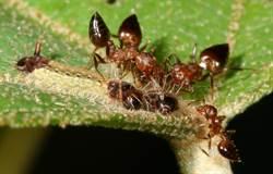振動訊號傳遞訊息蝶&蟻間的摩斯密碼