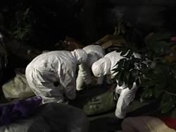 台北》橋頭發現麝香豬屍體 動保處採樣送驗
