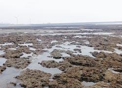 建三接嚴監督 藻礁影響最小化