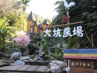 農場阿公寵孫打造夢幻城堡 遊客搶著來拍照