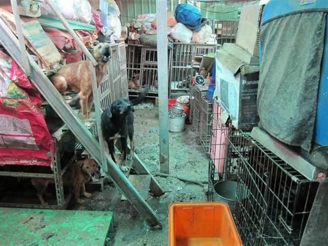 陳姓婦人在淡水小坪頂的鐵皮屋內遭新北市政府動保處發現30隻動物死亡,但法院認定非故意虐死動物判決無罪。(報系資料照/李文正台北傳真)