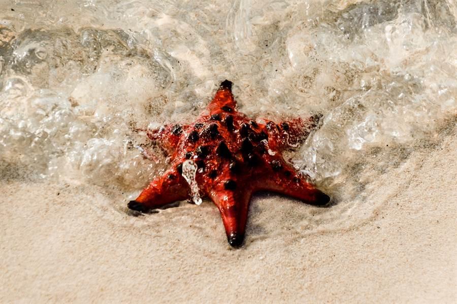 富國島近年來已成為國人最愛前往的旅遊勝地之一。 圖/盈達旅遊提供