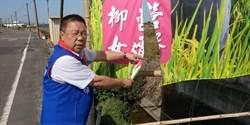 國民黨立委候選人蔡育輝競選布條遭破壞  報警追查中