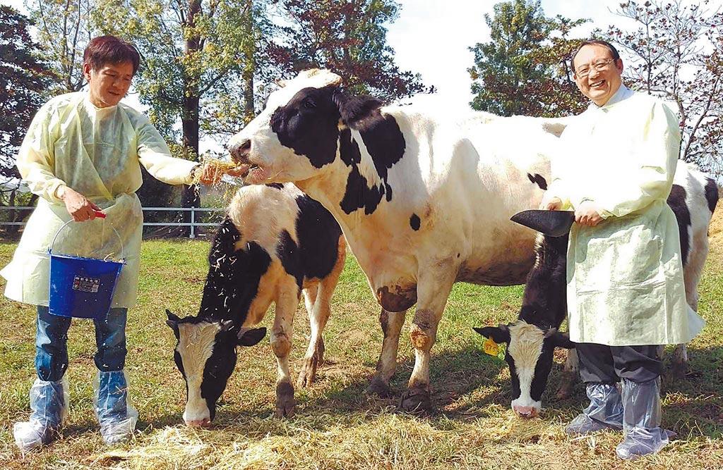 屏科大動物科學與畜產系教授沈朋志團隊,成功以「紡綞體轉置(ST)技術」,產下全球首例的ST牛,是具耐熱性的荷蘭牛。(潘建志攝)