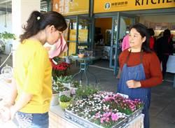 雜草變園藝珍品 蛻變出特別型態 埔里農會物流中心展出多變的酢醬草新品