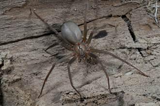 男森林浪漫求婚 劇毒蜘蛛咬臀GG了