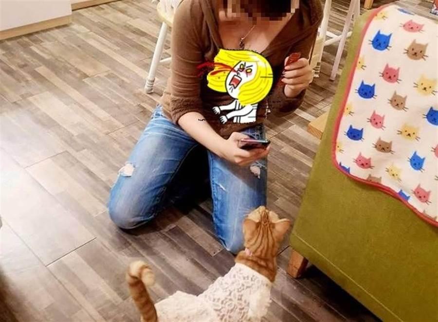 帽T妹俯身拍貓 超巨上帝視角曝光(圖翻攝自FB/加藤軍路邊隨手拍)