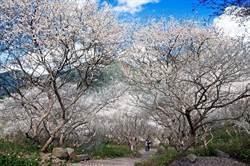 秋冬補助到南投 溫泉、賞花、遊燈會一網打盡 還可抽涵樓住宿券