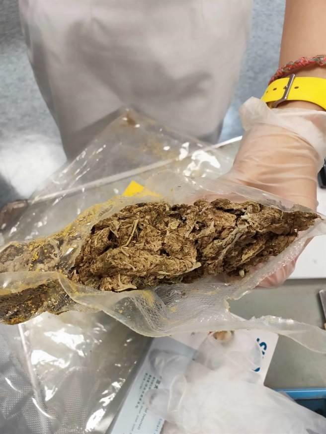 6月在桃園機場查獲的大麻走私案,也是竹聯幫平堂在幕後操控。(警方提供/胡欣男台北傳真)