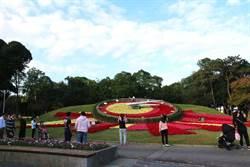 青年公園迎耶誕!繽紛花鐘如太陽 三色聖誕紅透溫馨