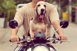 小狗坐機車後座他氣瘋 下一秒卻笑噴