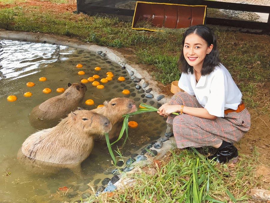喜歡各種動物的鍾瑶,與可愛水豚君親密互動。(林淑娟攝)