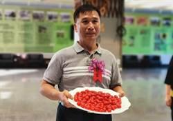 全國設施小果番茄競賽 嘉義縣新港鄉三度奪冠