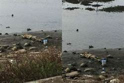 河邊驚見浮屍 細看嚇喊:好險沒報警