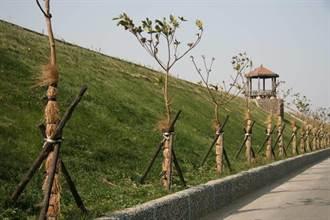 樹木栽種、營造友善生長環境 農委會提醒要種也要顧