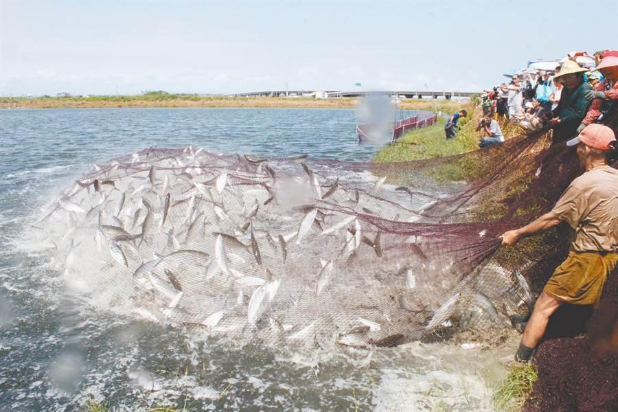 利多變燙手山芋,台南學甲與大陸之間過去有進行虱目魚契作,也是漁民主要收入。(本報資料照片)