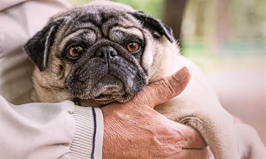 如何幫長輩延年益壽 研究:養這寵物吧  圖/Pixabay