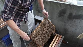 不只懂花草 宏國德霖園藝系與蜜蜂為伍取蜂蜜!