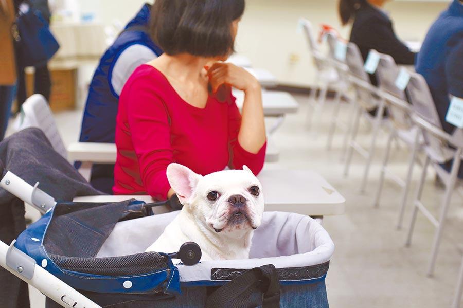 台大動物醫院與台北市動保處合辦國內首座教學醫院等級動物安養機構。(台北市動保處提供/簡立欣台北傳真)