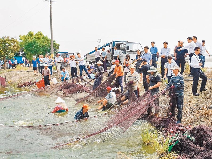 2014年8月,大陸國台辦官員到學甲參觀虱目魚塭。(學甲食品提供,本報系資料照片)