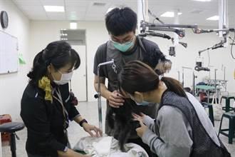 每個姿勢剪100次 弘光生寵物美容證照順利拿