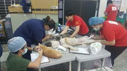 中市109年家犬貓絕育補助   1/1起開放申請
