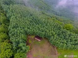 陸2019年造林逾億畝 貢獻全球綠化25%