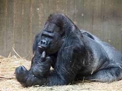 慘!德國動物園猿猴館除夕夜付之一炬,所有動物無一倖免