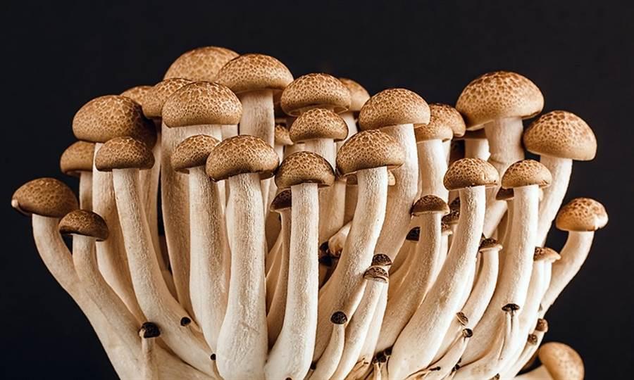 新加坡大學一項研究發現,每周吃2份150克(約四分之三杯)的菇類,可降低年長者罹患輕度認知障礙(MCI)的機率多達50%。(圖/Pixabay )