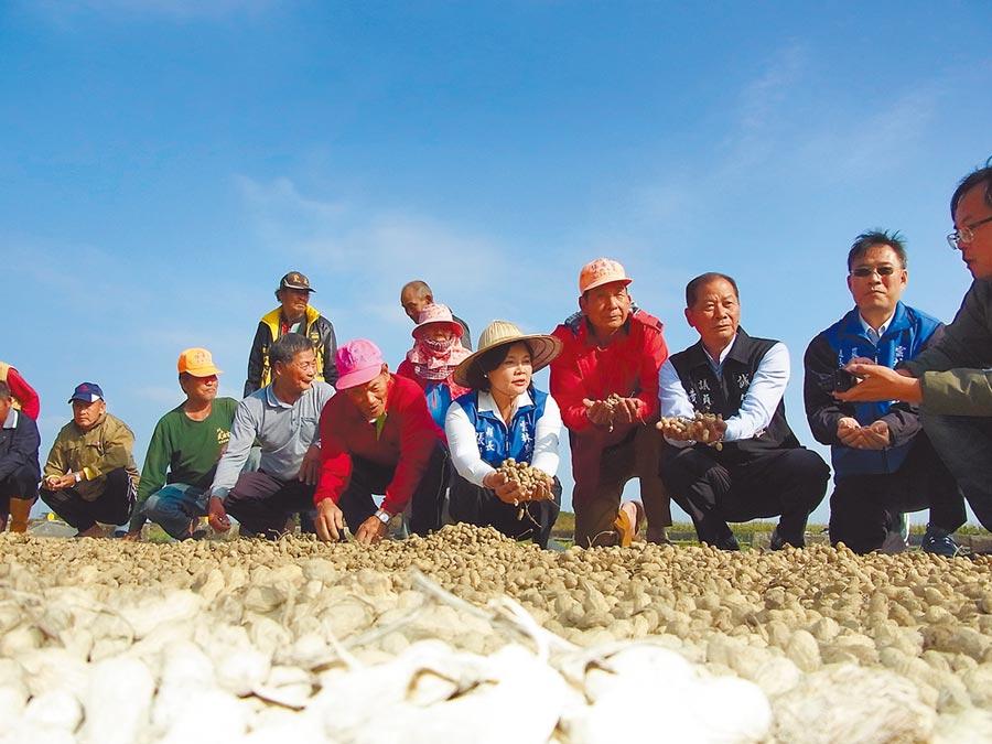 張麗善(右三)協助花生收購,盼農民過個好年。(張朝欣攝)