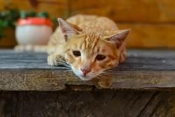 父過世愛貓拒進食 呆坐墓前網淚崩