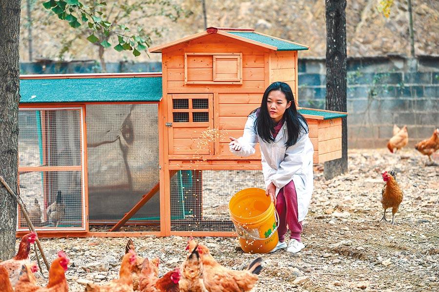 海歸「農二代」的葛雯,創設杭州市臨安區首家無公害蛋雞標準化自動化規模養殖場。(新華社)