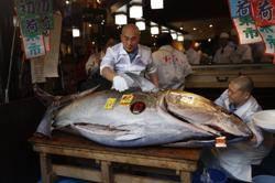日本新春黑鮪魚拍賣,拍出第二高天價