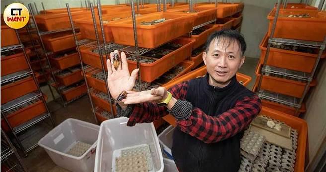 謝瑋晏如今是台灣最大蟑螂養殖戶,年收入近400萬元。(圖/張文玠攝)